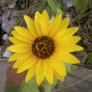 orphan daisy04